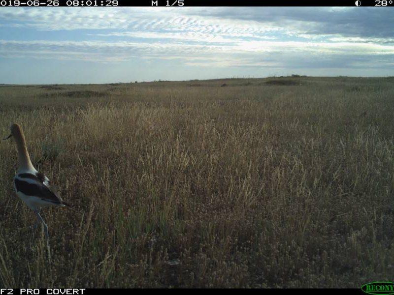 camera-trap (2)
